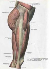 Muscle Tightness Legs 98